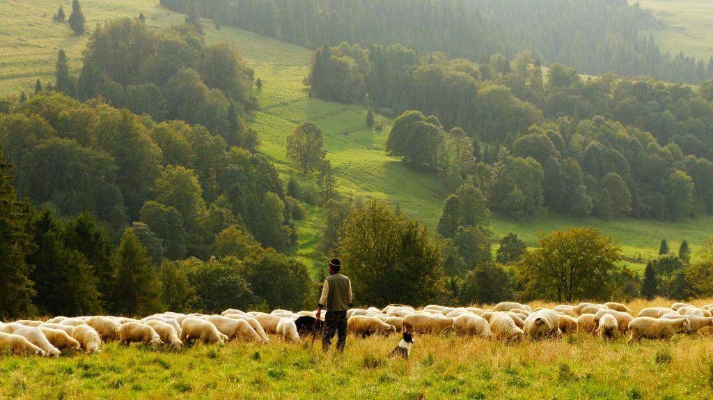 our good shepherd leads on softly